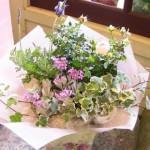 2010.02.18【注文したお花】バラとラベンダーの寄鉢【用途】誕生日ギフト